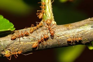 insect-damage-ants