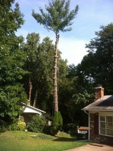 burke tree limb removal services