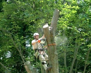 burke tree removal tree cutting